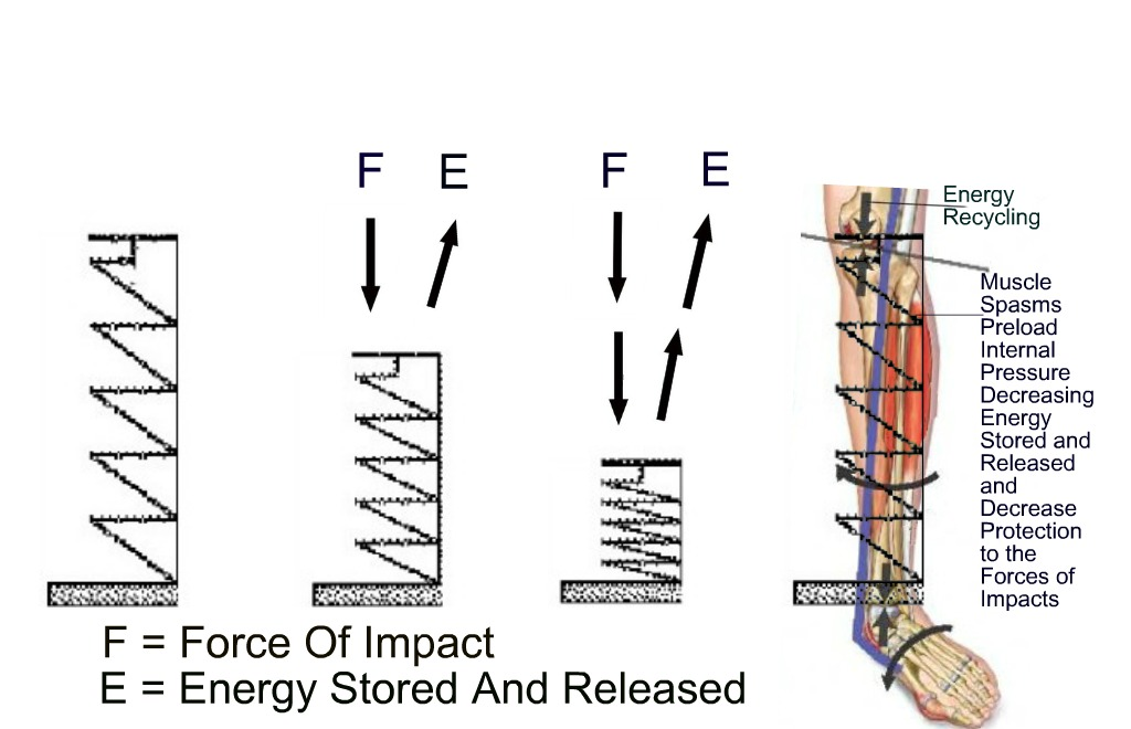 Force Of Impact/Energy Stored And Released