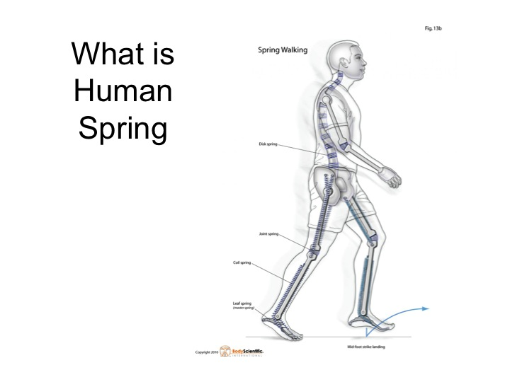 Human Spring Dr. James Stoxen